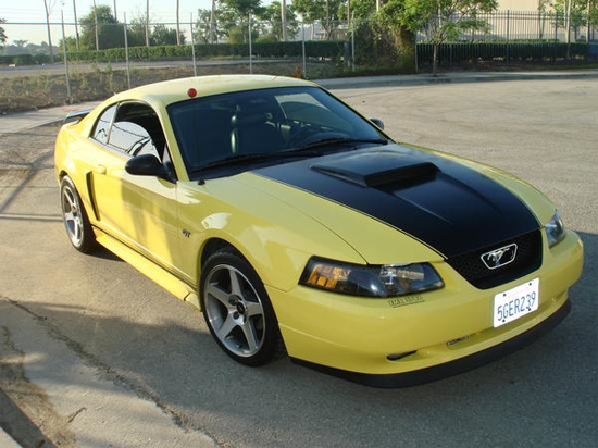 yellowstang