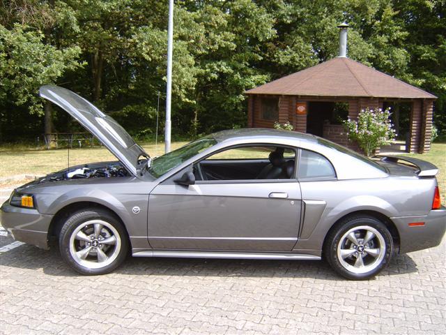 Anniversary Mustang